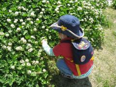 大好きな草花観察