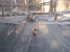 ちっちゃい赤ちゃん猿