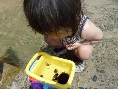 ウニ、貝、ちっちゃい魚など