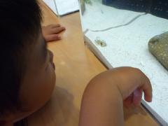 魚とにらめっこ