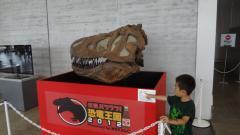 ティラノサウルスの頭